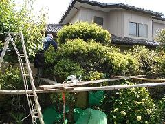植木工事 こてはし