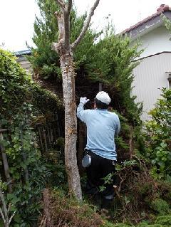 H29 千城台 植木工事
