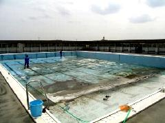 プール清掃