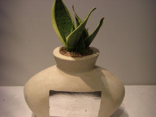 陶器鉢入りサンスベリア
