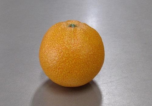■くだもの模型 オレンジ