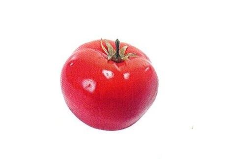 ◇やさい模型 トマト・とまと