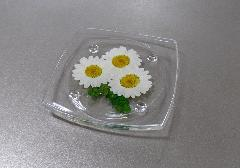 ○押し花シリーズ 押し花の供物台 ノースポール