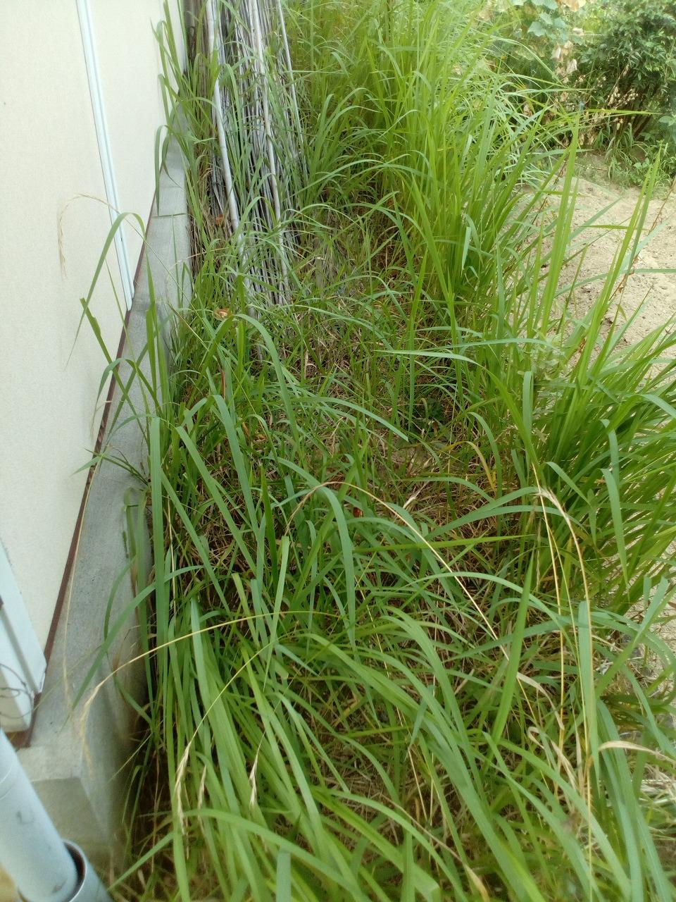 一戸建て 草刈り