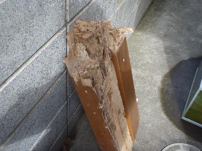 上がり框がヤマトシロアリに大きく喰害されていました!