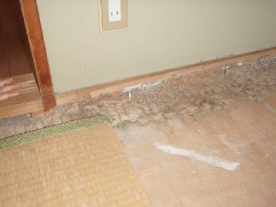畳の下にまでシロアリが侵出している。