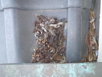 屋根に残された動物のフン。