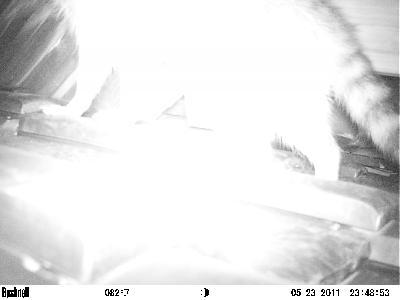 屋根に仕掛けた監視カメラ画像に・・・