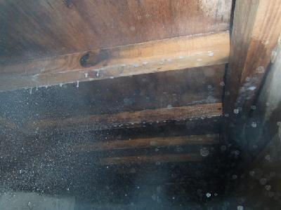 シロアリの喰害も確認されましたので、薬剤に「防カビ剤」を添加して散布を行いました。建物の西側には山が迫っている環境でしたので、床下の通気が上手くいってなかったのではないかと思われました。
