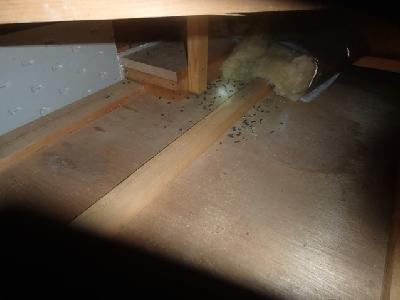 数年前に別の業者さんがハクビシンの侵入口封鎖を行った後は、現在に至るまで新たな侵入の形跡は確認されませんでした。しかし写真のようにネズミのフンが確認され、侵入していたのはネズミの可能性が出てまいりました。