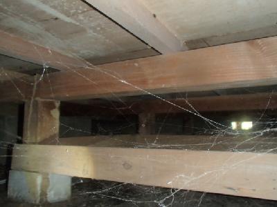 床下を見たところ、束材と大引き材に太い蟻道がありました