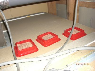ユニットバス天井裏にマウスフィード(毒餌)を設置