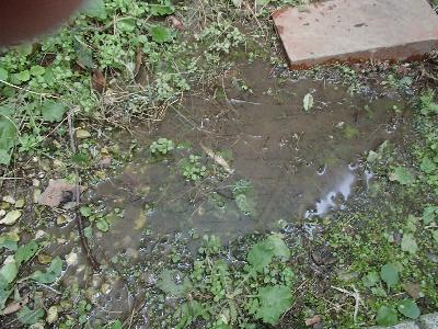 建物脇に設置された給水設備の漏水による水溜まりができていた