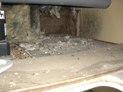 ユニットバスの天井裏にクマネズミの糞