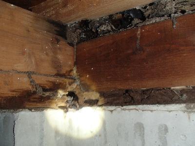 浴室、洗面の床下木部に腐食と大きな蟻道を発見いたしました