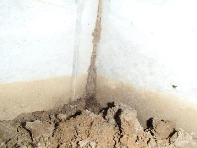 和室下部の土壌から上がっていた蟻道