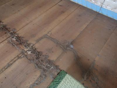畳を上げたところ、その裏面に白蟻の蟻道が認められました