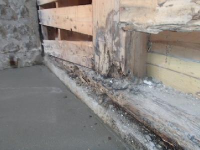 浴室土台材に白蟻被害と腐食
