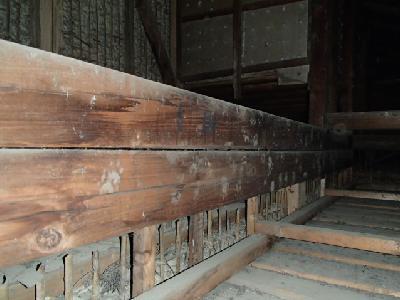 天井裏の梁材に付いたハクビシンの足跡