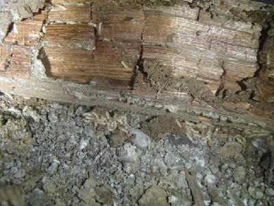 廊下床下残材に活動中の白蟻