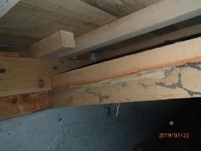玄関付近の大引き材にシロアリによる喰害