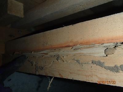 玄関付近の大引き材にシロアリによる喰害(拡大)