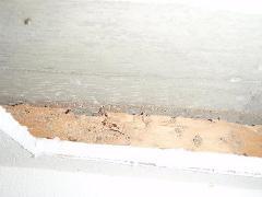 分譲マンションの1階でシロアリ被害が!