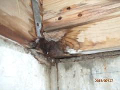 浴室から漏水があり、土台木部に湿潤。