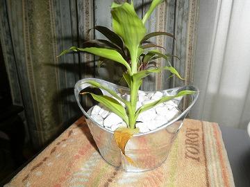 趣味の『観葉植物』