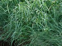 草刈り・雑草除去作業