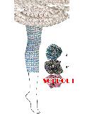 【sale】ウロコ柄 7分丈スパッツ (ブラウン)SP0170J-81
