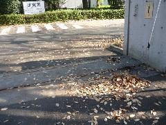 所沢市 研究施設の落ち葉回収作業