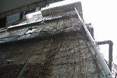 東京都世田谷区オフィスビル外壁のツタ取り作業 作業前