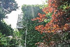 東京都新宿区集合住宅のツタ除去作業