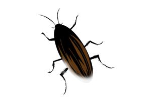 つた害虫ゴキブリ