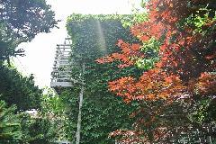 東京都新宿区集合住宅外壁のツタ取り作業