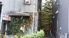 東京都渋谷区恵比寿建物外壁のつた除草