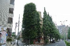 東京都港区白金台ビルを覆い隠す植物の除草1