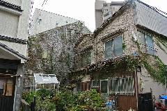 東京都立川市戸建てツタ除去作業