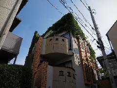 東京都目黒区戸建住宅ツタ除去作業