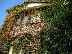 東京都江戸川区アパート外壁ツタの除草