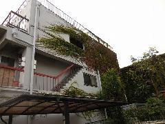 東京都品川区 社員寮のつた除草作業