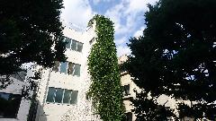 新宿学校ツタ除去作業