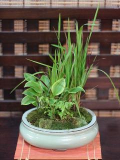 苔ミニ小鉢