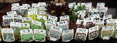 『多肉植物・15種類!!』