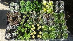 多肉植物15種類♪
