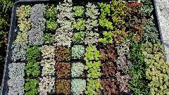 多肉植物20種類♪