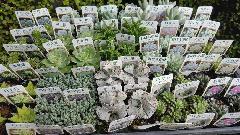 多肉植物15種類!60個入荷しました♪