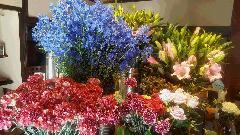 本日入荷の花たち♪