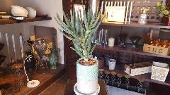 ディコトマ 美品 花器付き